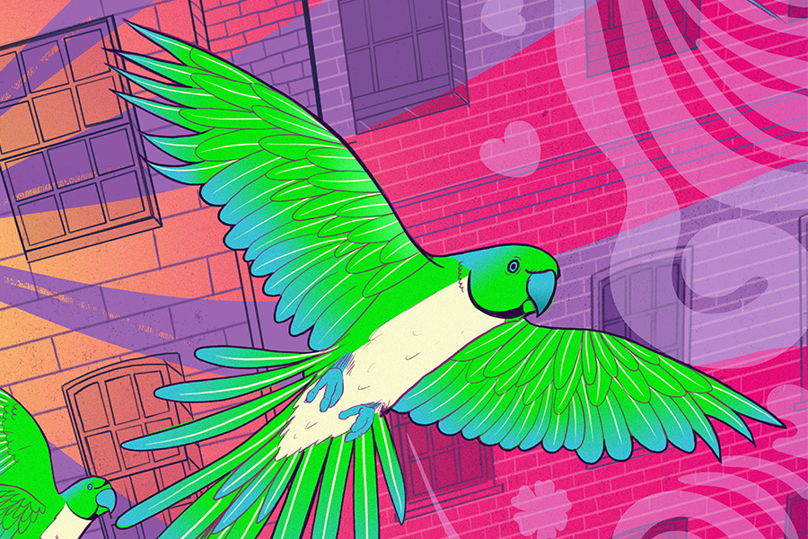A parakeet illustration close up part of the Transport for London Prize for Illustration entry by Matt Richards